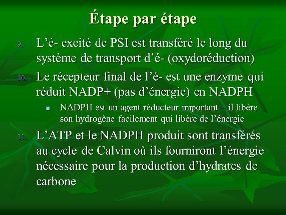 9. Lé- excité de PSI est transféré le long du système de transport dé- (oxydoréduction) 10. Le récepteur final de lé- est une enzyme qui réduit NADP+