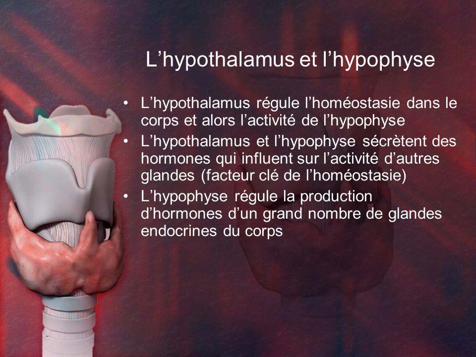 Lhypothalamus régule lhoméostasie dans le corps et alors lactivité de lhypophyse Lhypothalamus et lhypophyse sécrètent des hormones qui influent sur lactivité dautres glandes (facteur clé de lhoméostasie) Lhypophyse régule la production dhormones dun grand nombre de glandes endocrines du corps Lhypothalamus et lhypophyse