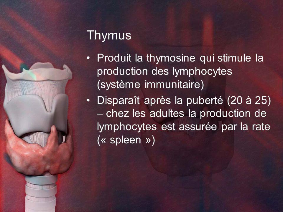 Thymus Produit la thymosine qui stimule la production des lymphocytes (système immunitaire) Disparaît après la puberté (20 à 25) – chez les adultes la production de lymphocytes est assurée par la rate (« spleen »)
