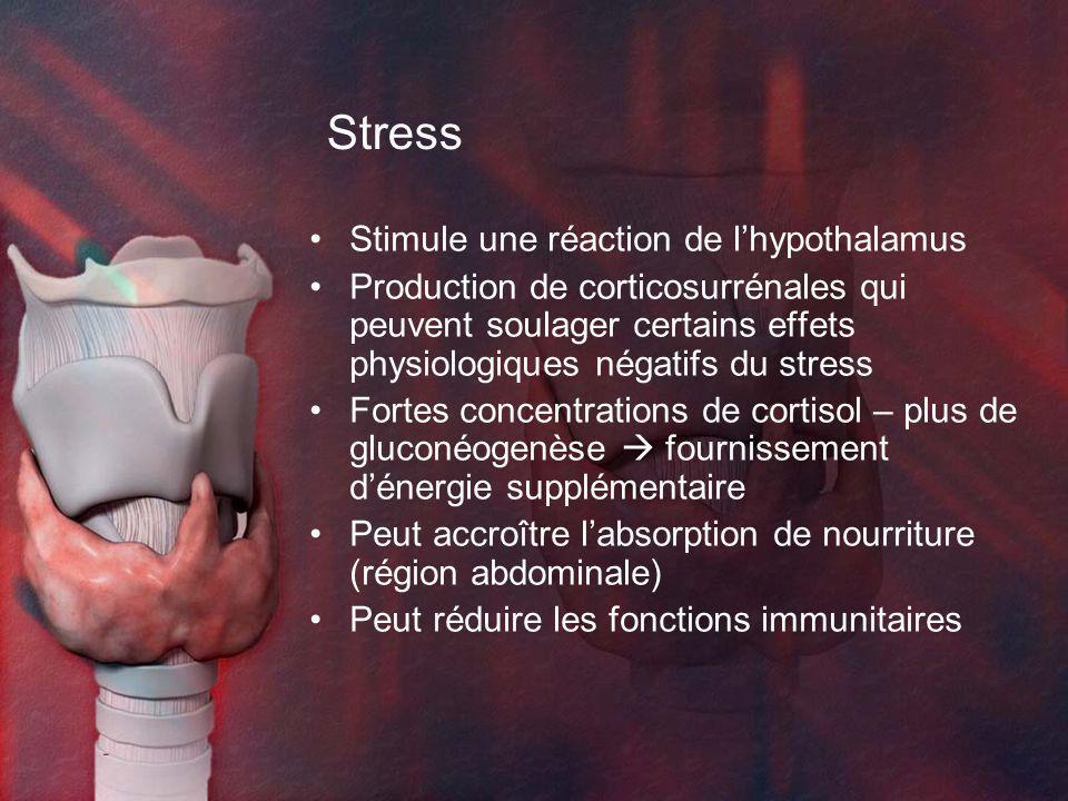 Stress Stimule une réaction de lhypothalamus Production de corticosurrénales qui peuvent soulager certains effets physiologiques négatifs du stress Fortes concentrations de cortisol – plus de gluconéogenèse fournissement dénergie supplémentaire Peut accroître labsorption de nourriture (région abdominale) Peut réduire les fonctions immunitaires