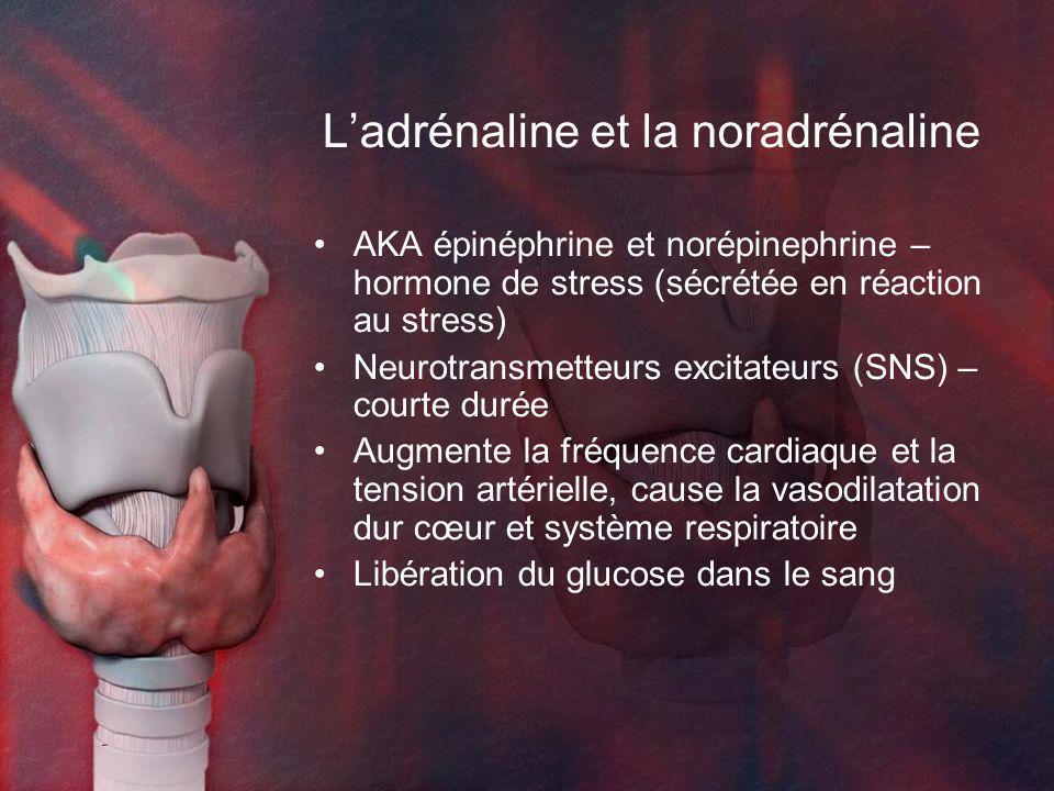 Ladrénaline et la noradrénaline AKA épinéphrine et norépinephrine – hormone de stress (sécrétée en réaction au stress) Neurotransmetteurs excitateurs (SNS) – courte durée Augmente la fréquence cardiaque et la tension artérielle, cause la vasodilatation dur cœur et système respiratoire Libération du glucose dans le sang