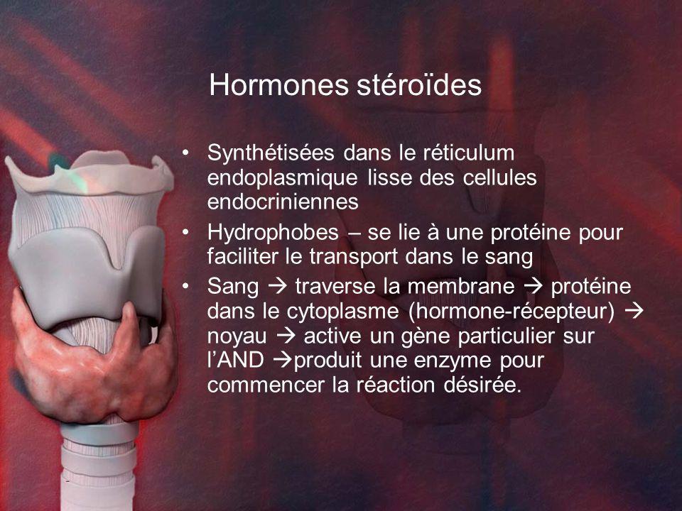 Hormones stéroïdes Synthétisées dans le réticulum endoplasmique lisse des cellules endocriniennes Hydrophobes – se lie à une protéine pour faciliter le transport dans le sang Sang traverse la membrane protéine dans le cytoplasme (hormone-récepteur) noyau active un gène particulier sur lAND produit une enzyme pour commencer la réaction désirée.