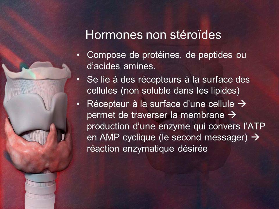 Hormones non stéroïdes Compose de protéines, de peptides ou dacides amines. Se lie à des récepteurs à la surface des cellules (non soluble dans les li