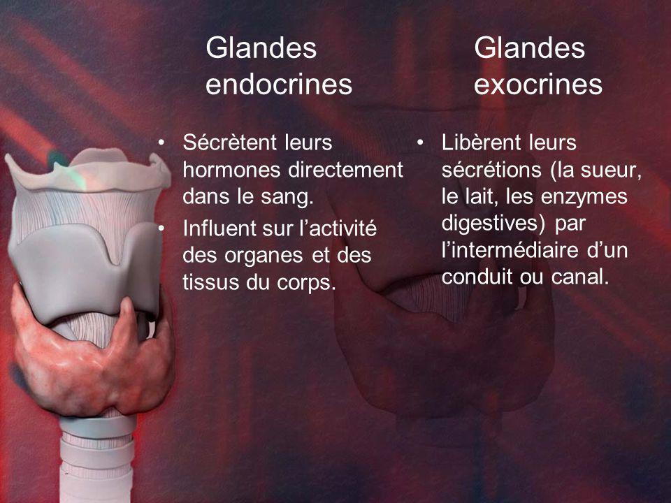 GlandesGlandes endocrinesexocrines Sécrètent leurs hormones directement dans le sang. Influent sur lactivité des organes et des tissus du corps. Libèr
