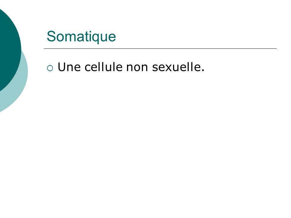 Somatique Une cellule non sexuelle.