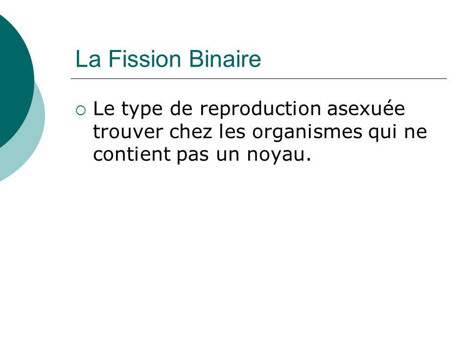 La Fission Binaire Le type de reproduction asexuée trouver chez les organismes qui ne contient pas un noyau.
