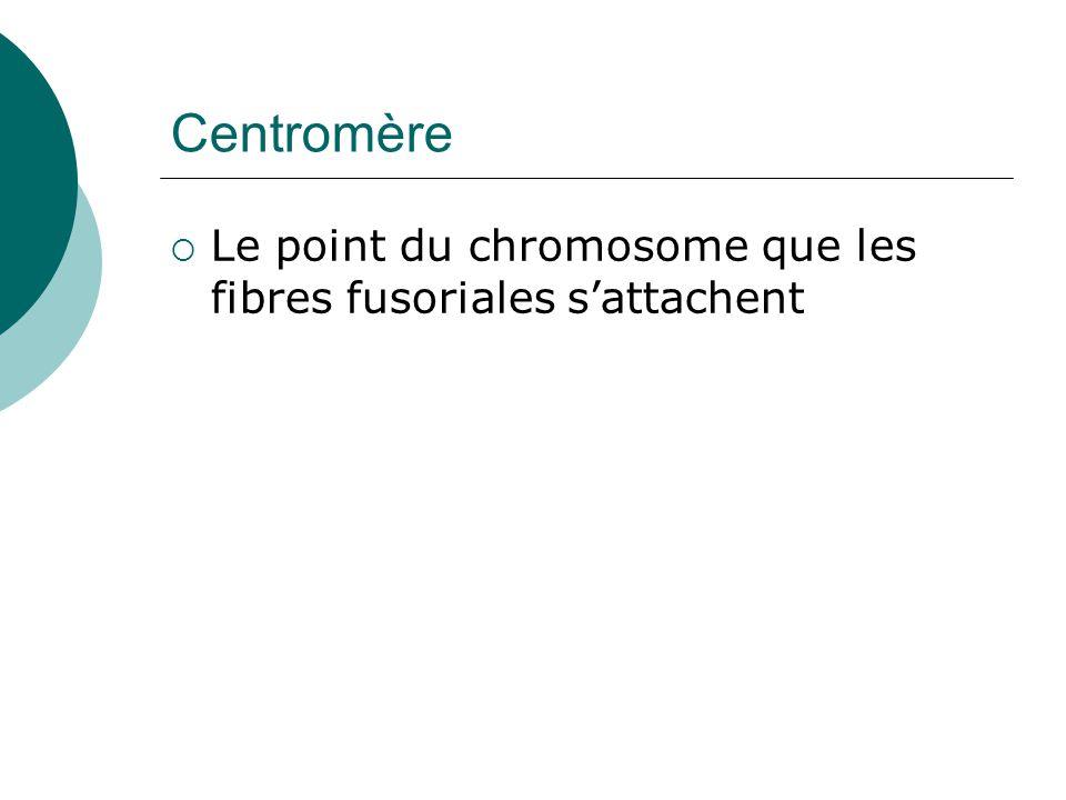 Centromère Le point du chromosome que les fibres fusoriales sattachent