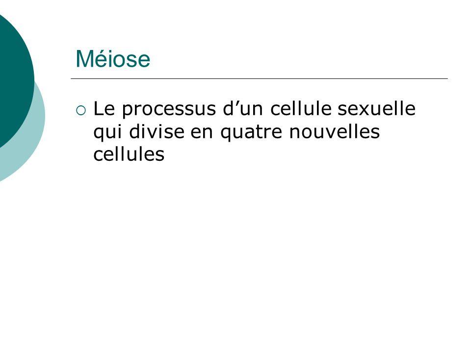 Méiose Le processus dun cellule sexuelle qui divise en quatre nouvelles cellules