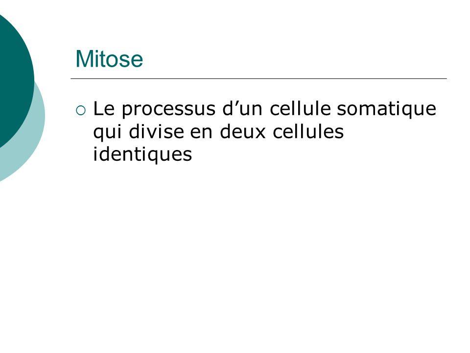 Mitose Le processus dun cellule somatique qui divise en deux cellules identiques