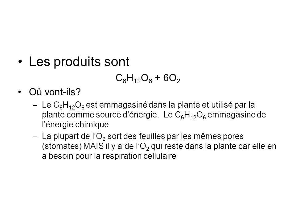 Les produits sont C 6 H 12 O 6 + 6O 2 Où vont-ils? –Le C 6 H 12 O 6 est emmagasiné dans la plante et utilisé par la plante comme source dénergie. Le C