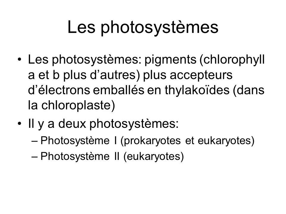 Les photosystèmes Les photosystèmes: pigments (chlorophyll a et b plus dautres) plus accepteurs délectrons emballés en thylakoïdes (dans la chloroplas