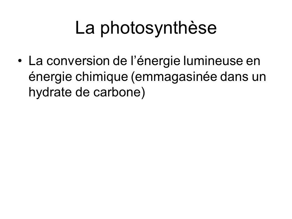 La photosynthèse La conversion de lénergie lumineuse en énergie chimique (emmagasinée dans un hydrate de carbone)
