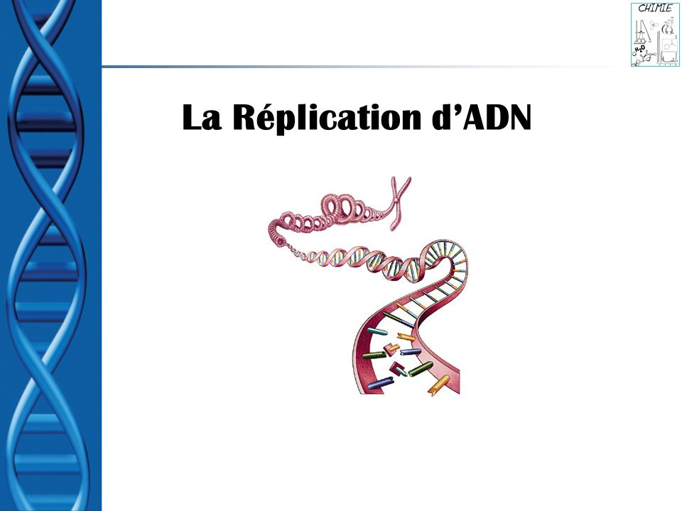 La Réplication dADN