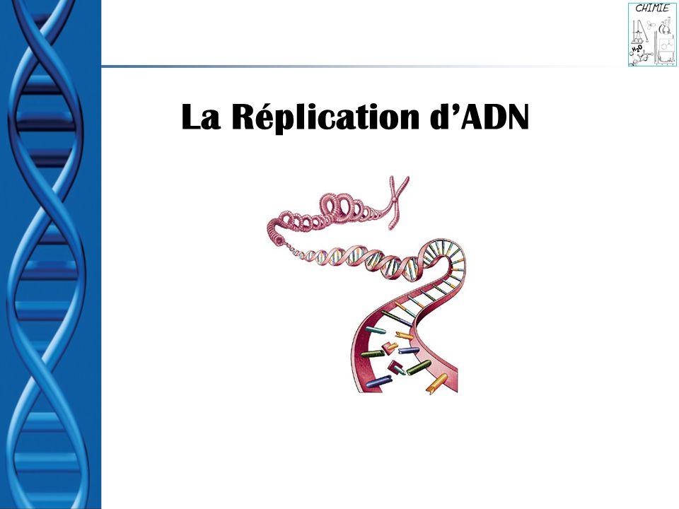 La Division Cellulaire et La Réplication dADN Les cellules se divise La Croissance, la Réparation, le Remplacement Avant que les cellules divisent ils doivent doubler les structures de la cellule, comme les organites et leurs informations génétiques