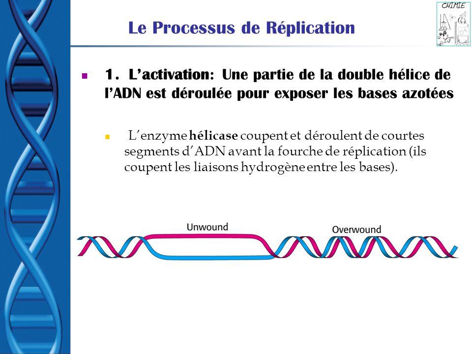 Le Processus de Réplication 1. Lactivation: Une partie de la double hélice de lADN est déroulée pour exposer les bases azotées Lenzyme hélicase coupen