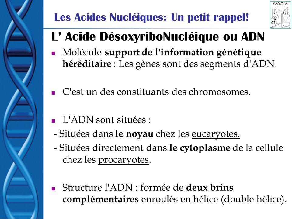 L Acide DésoxyriboNucléique ou ADN Molécule support de l'information génétique héréditaire : Les gènes sont des segments d'ADN. C'est un des constitua