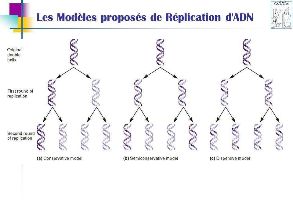 Les Modèles proposés de Réplication d'ADN