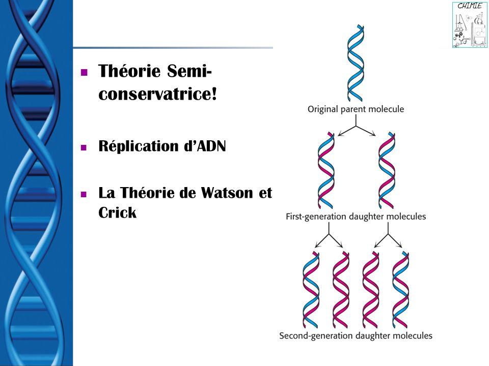 Théorie Semi- conservatrice! Réplication dADN La Théorie de Watson et Crick