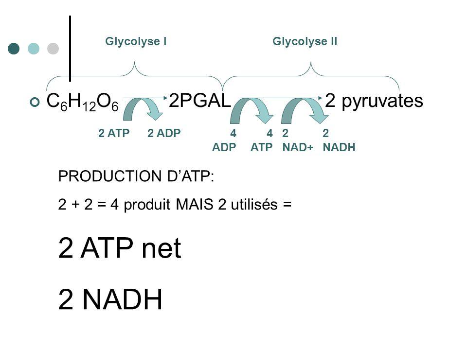 C 6 H 12 O 6 2PGAL 2 pyruvates Glycolyse IGlycolyse II 2 ATP2 ADP4 ADP 4 ATP 2 NAD+ 2 NADH PRODUCTION DATP: 2 + 2 = 4 produit MAIS 2 utilisés = 2 ATP