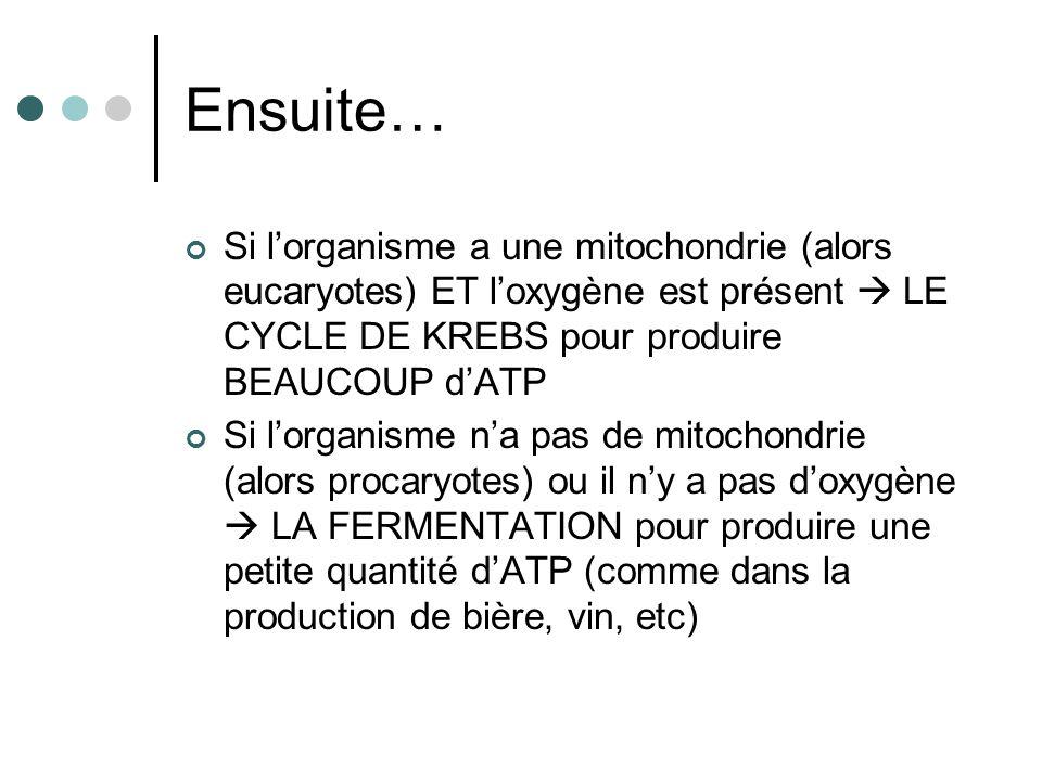 Ensuite… Si lorganisme a une mitochondrie (alors eucaryotes) ET loxygène est présent LE CYCLE DE KREBS pour produire BEAUCOUP dATP Si lorganisme na pa