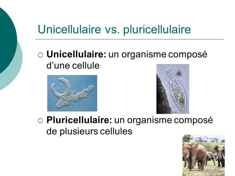 Unicellulaire vs. pluricellulaire Unicellulaire: un organisme composé dune cellule Pluricellulaire: un organisme composé de plusieurs cellules
