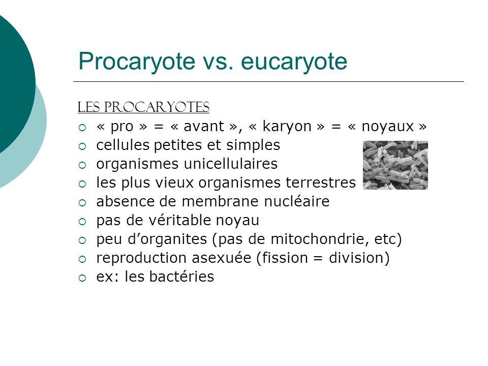 Procaryote vs. eucaryote Les Procaryotes « pro » = « avant », « karyon » = « noyaux » cellules petites et simples organismes unicellulaires les plus v