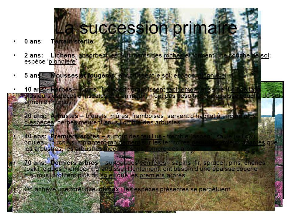 0 ans: Terrain stérile 2 ans:Lichens: absorbent les nutriments des roches et forment une couche de sol; espèce pionnière 5 ans: Mousses et fougères: e