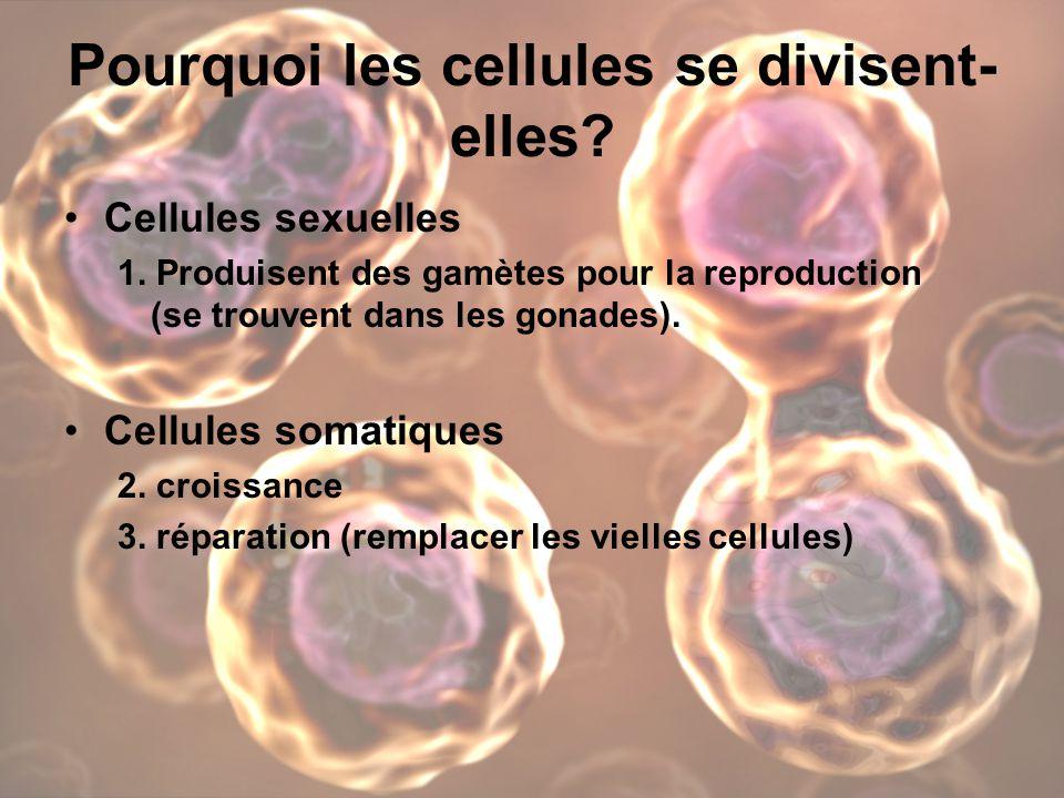 Pourquoi les cellules se divisent- elles.Cellules sexuelles 1.