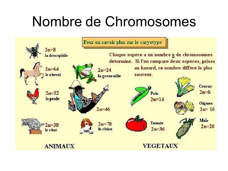 Nombre de Chromosomes