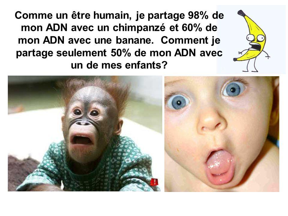 Comme un être humain, je partage 98% de mon ADN avec un chimpanzé et 60% de mon ADN avec une banane.