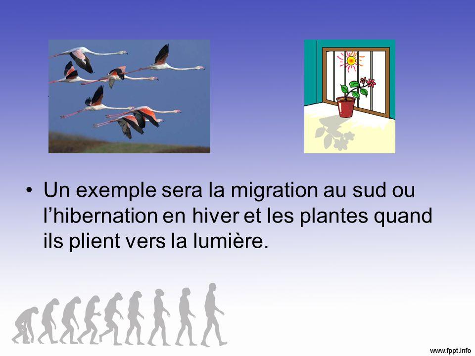 Un exemple sera la migration au sud ou lhibernation en hiver et les plantes quand ils plient vers la lumière.
