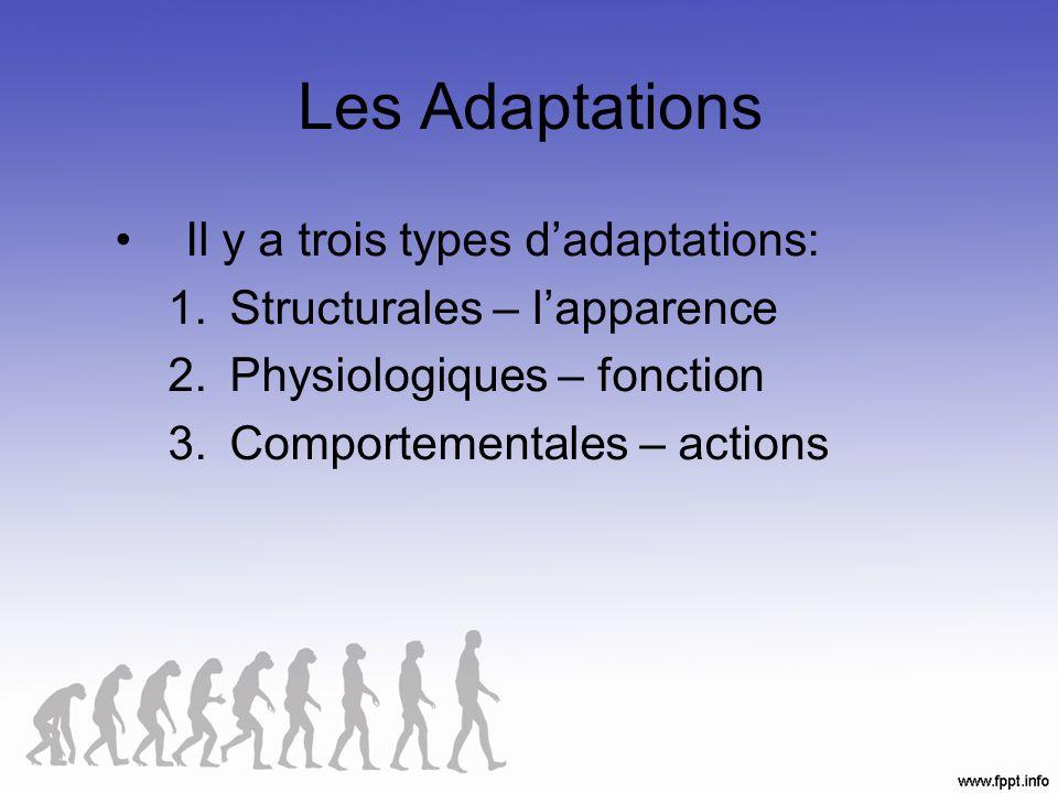 Adaptations structurales La forme ou larrangement de traits physiques particuliers.