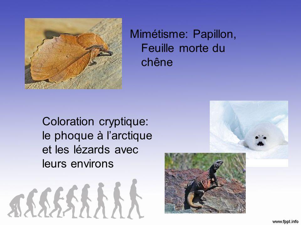 Adaptations physiologiques Fonctions du corps dun organisme (comment ça marche).