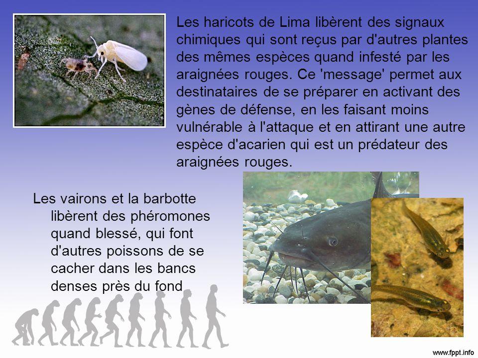 Adaptations comportementales La façon dont les organismes réagissent à leur environnement.