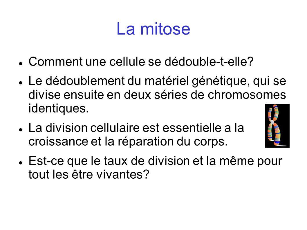 La mitose Comment une cellule se dédouble-t-elle? Le dédoublement du matériel génétique, qui se divise ensuite en deux séries de chromosomes identique