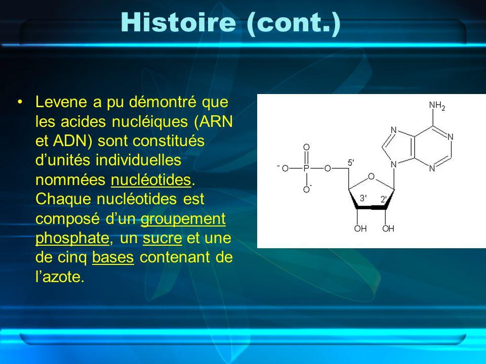 Histoire (cont.) Levene a pu démontré que les acides nucléiques (ARN et ADN) sont constitués dunités individuelles nommées nucléotides. Chaque nucléot