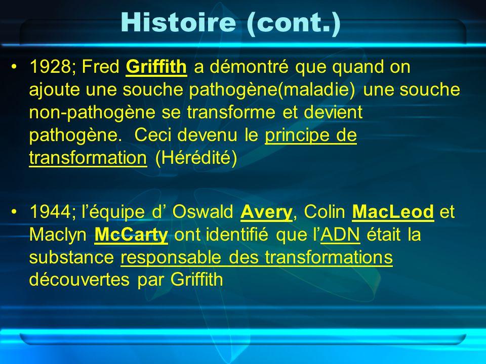 Histoire (cont.) 1928; Fred Griffith a démontré que quand on ajoute une souche pathogène(maladie) une souche non-pathogène se transforme et devient pa