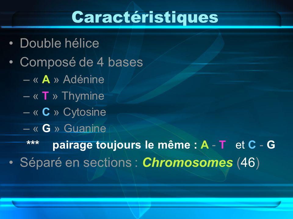 Caractéristiques Double hélice Composé de 4 bases –« A » Adénine –« T » Thymine –« C » Cytosine –« G » Guanine *** pairage toujours le même : A - T et