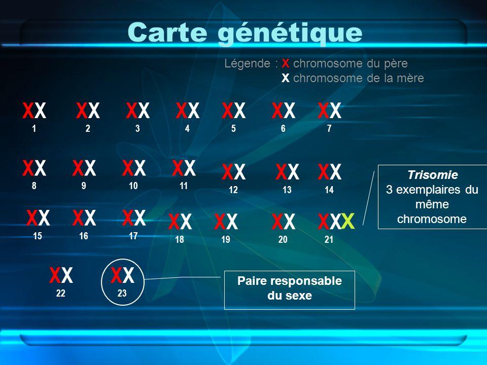 Carte génétiqueX XX2XX2X XX1XX1X XX4XX4X XX3XX3X XX6XX6X XX5XX5X XX8XX8X XX7XX7X 10X XX9XX9X 11 X 13X 12X 14 X 20X 19X 18 X 17X 16X 15 X 23X 22 X 21 L