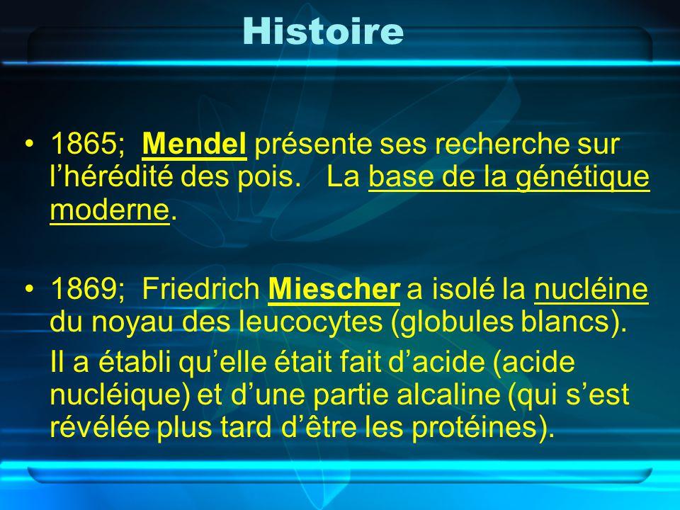 Histoire 1865; Mendel présente ses recherche sur lhérédité des pois. La base de la génétique moderne. 1869; Friedrich Miescher a isolé la nucléine du