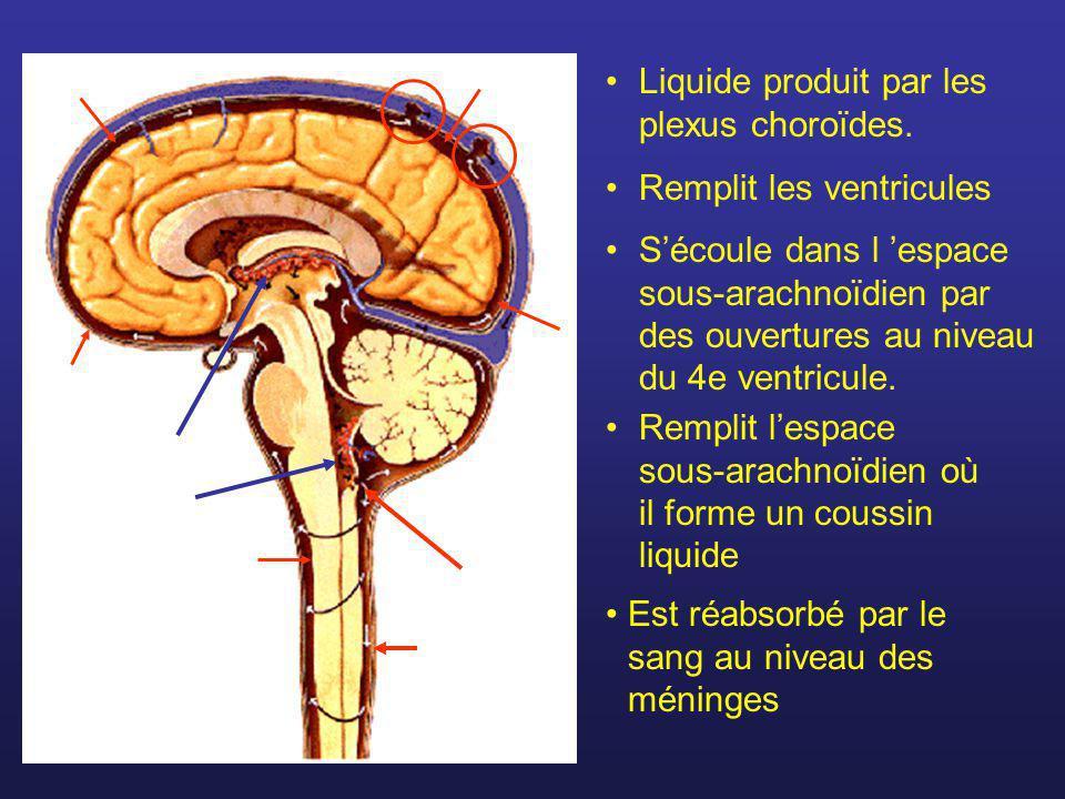 Le tronc cérébral Formé de : Mésencéphale Pont (métencéphale) Bulbe rachidien (myélencéphale)