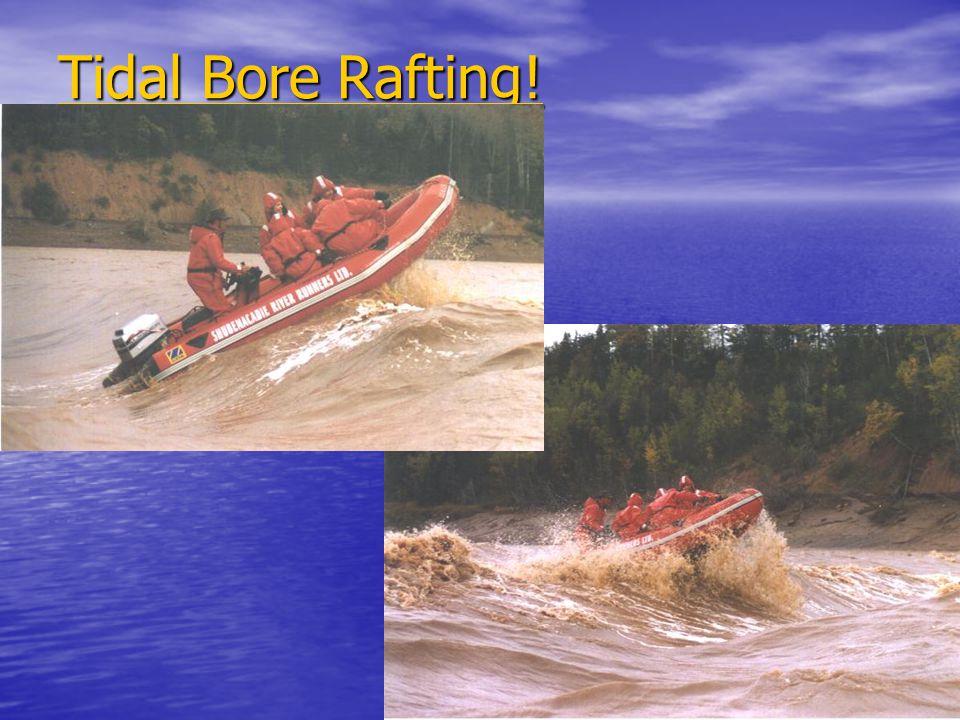 Tidal Bore Rafting! Tidal Bore Rafting!