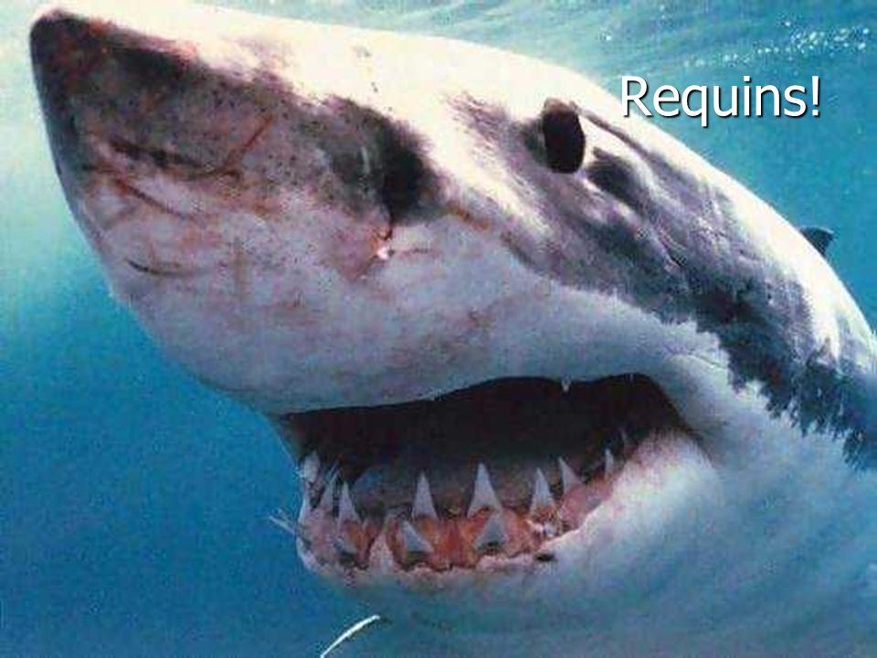 Requins!