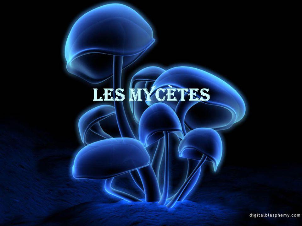 Caractéristiques 1.Tous les mycètes nont pas de chlorophylle (hétérotrophe).