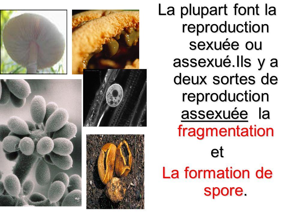 La plupart font la reproduction sexuée ou assexué.Ils y a deux sortes de reproduction assexuée la fragmentation et La formation de spore.