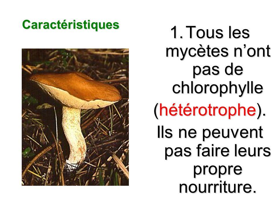 Les Caracteristiques Majeurs Des Mycetes Les mycètes se reproduisent par des spores asexuée et sexuée Les Mycètes sont des hétérotrophes Le corps des mycètes est fabriqué des hyphes les mycètes ne peuvent pas se déplacer Les mycètes sont des eucaryotes Il y a des Mycètes quont peut manger Les Mycètes ne sont pas vert parce quils nont pas de chlorophylle