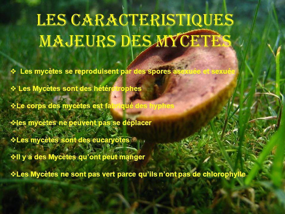 Les Caracteristiques Majeurs Des Mycetes Les mycètes se reproduisent par des spores asexuée et sexuée Les Mycètes sont des hétérotrophes Le corps des