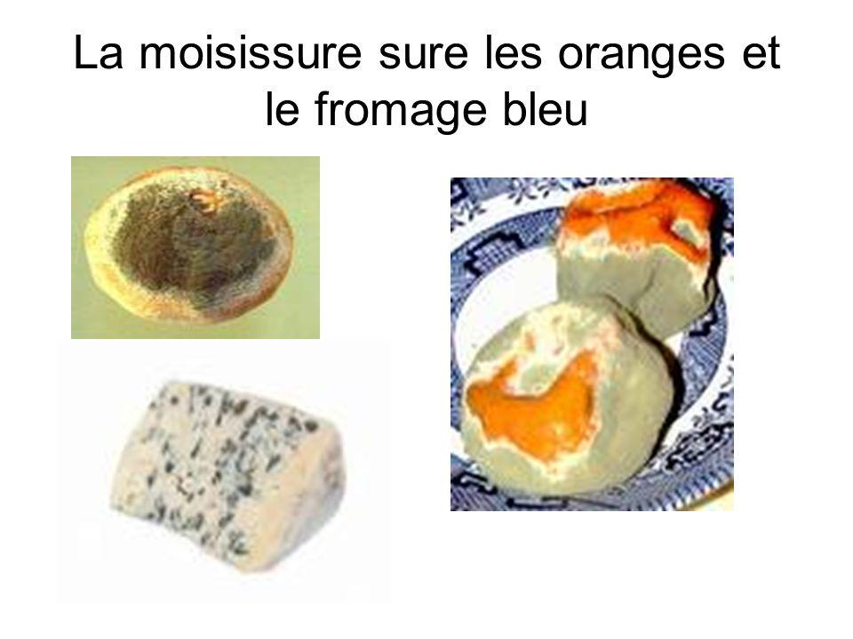 La moisissure sure les oranges et le fromage bleu