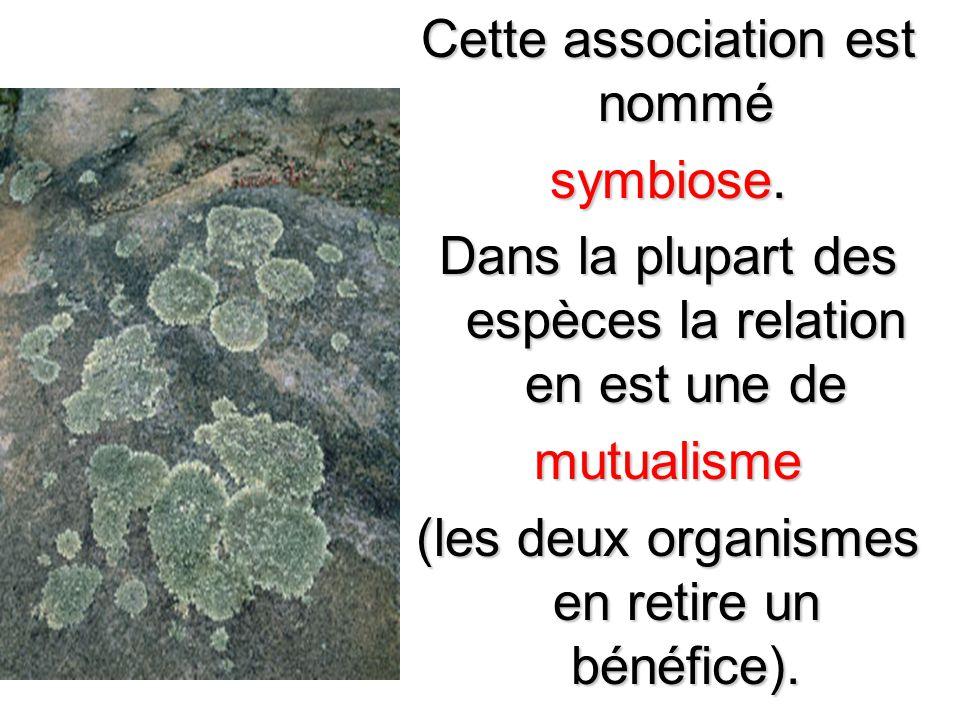 Cette association est nommé symbiose. Dans la plupart des espèces la relation en est une de mutualisme (les deux organismes en retire un bénéfice).