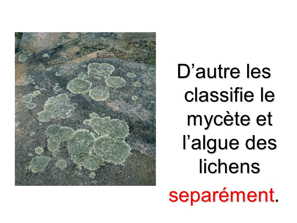 Dautre les classifie le mycète et lalgue des lichens separément.